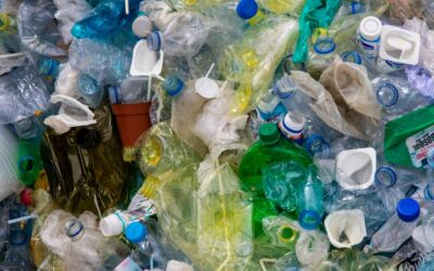 Chromatogeny: Cellulotech's solution to the plastic crisis